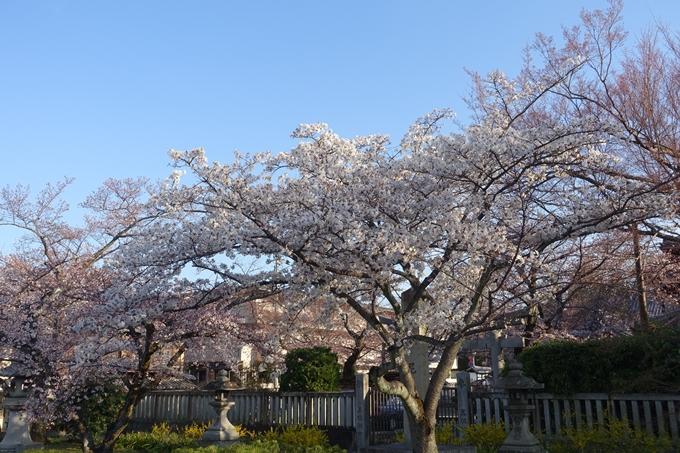 京都桜速報2019_14 No16