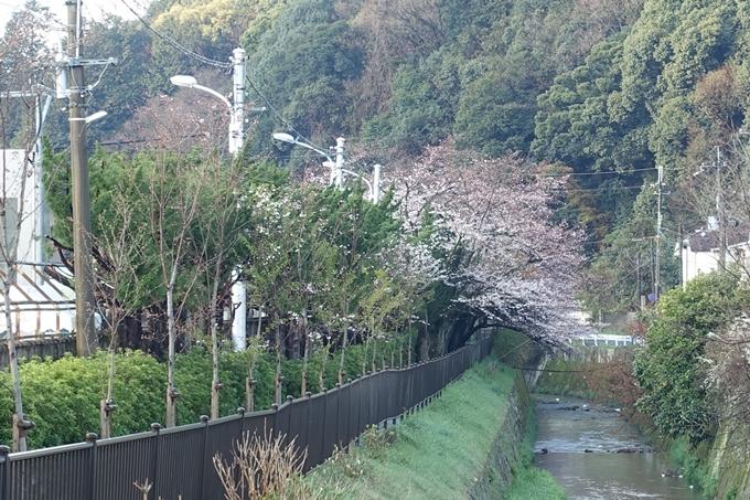 京都桜速報2019_15 No6