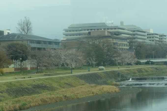 京都桜速報2019_16 No2