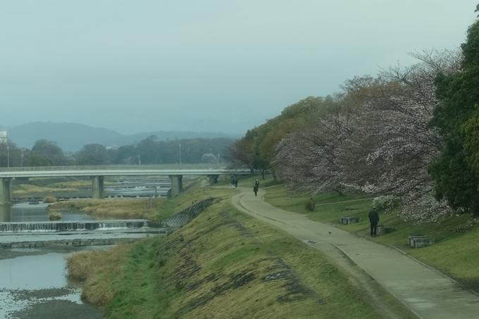 京都桜速報2019_16 No3