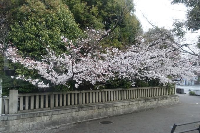 京都桜速報2019_16 No4