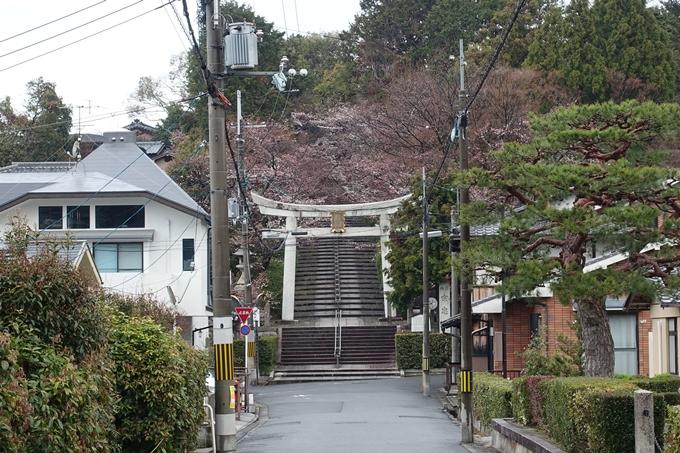 京都桜速報2019_17 No2