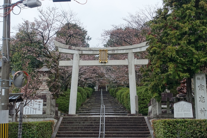 京都桜速報2019_17 No3