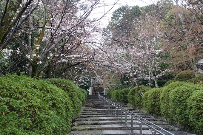 京都桜速報2019_17 No4