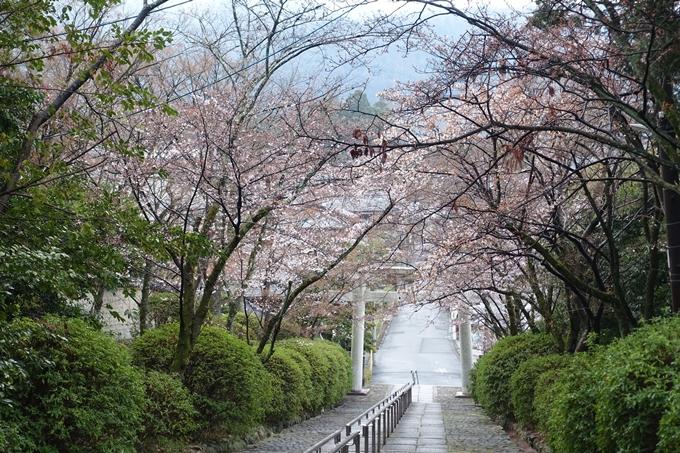 京都桜速報2019_17 No6
