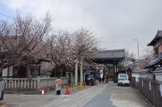 京都桜速報2019_19 No2