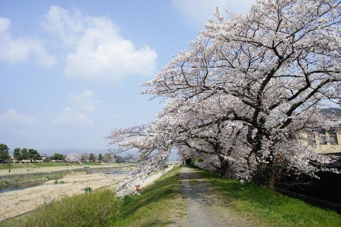 京都桜速報2019_28 No2