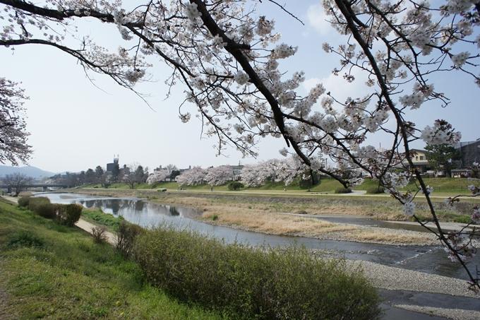 京都桜速報2019_28 No3