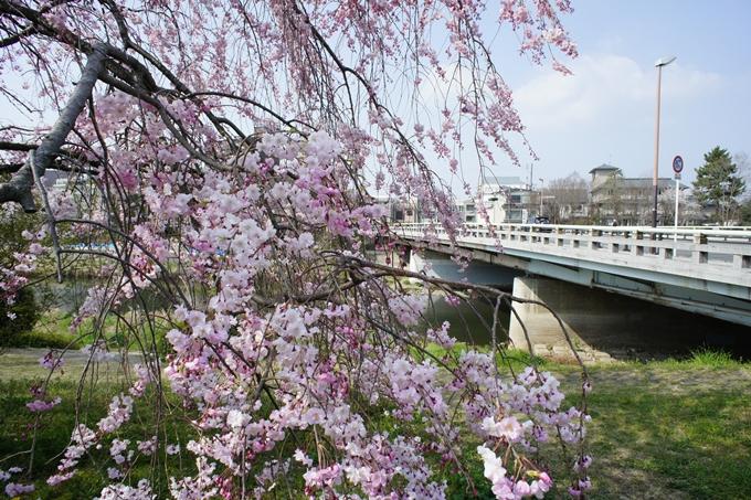 京都桜速報2019_28 No5