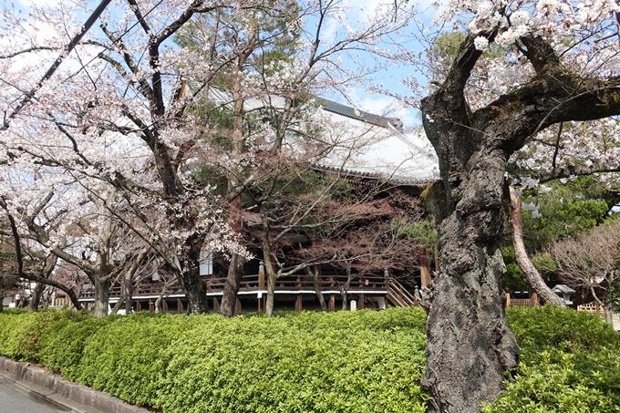 京都桜速報2019_19 No9