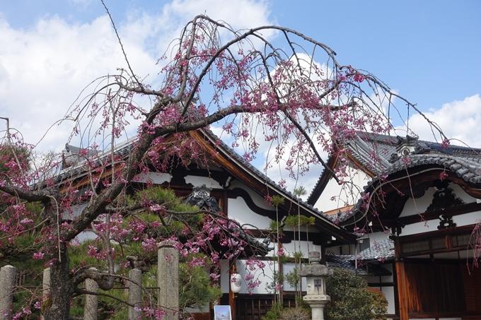京都桜速報2019_19 No11
