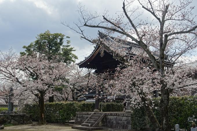 京都桜速報2019_19 No15