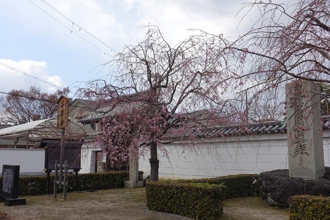 京都桜速報2019_19 No18