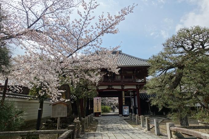 京都桜速報2019_19 No21