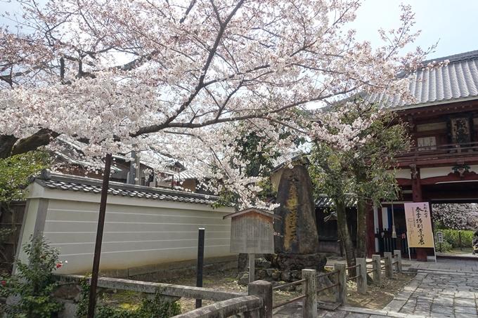 京都桜速報2019_19 No22