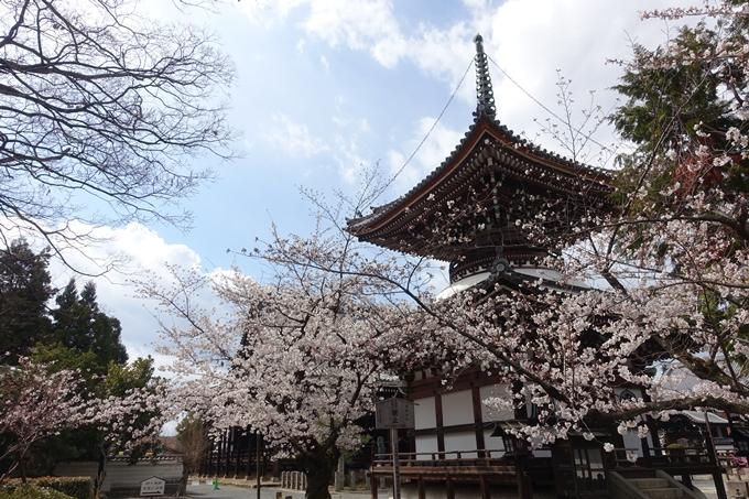 京都桜速報2019_19 No24