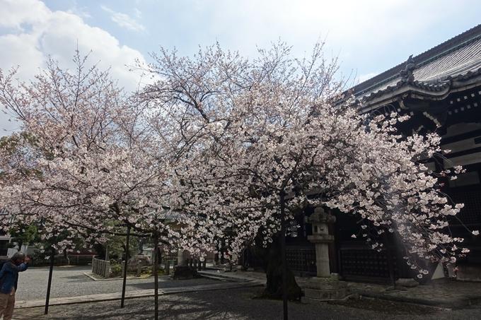京都桜速報2019_19 No27