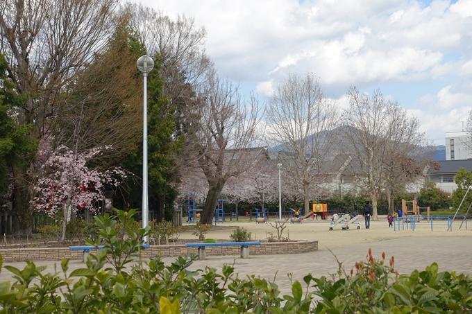京都桜速報2019_19 No28