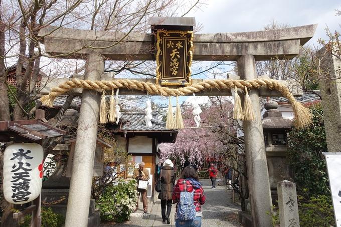 京都桜速報2019_19 No29