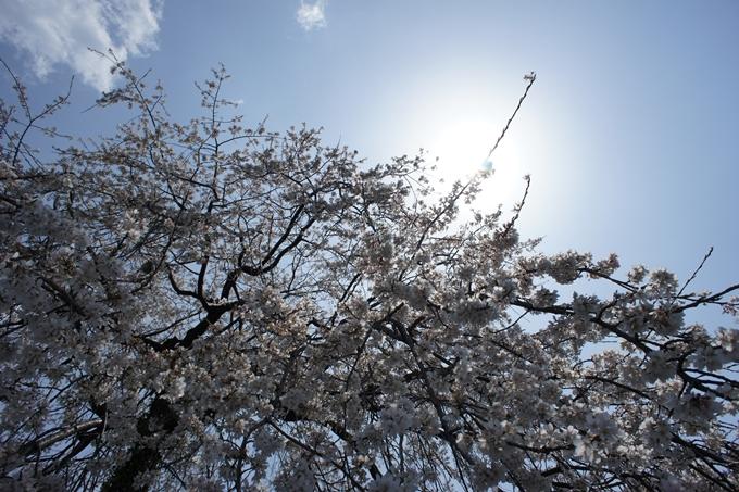 京都桜速報2019_28 No10