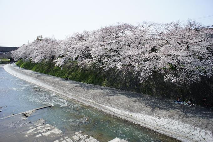 京都桜速報2019_28 No11