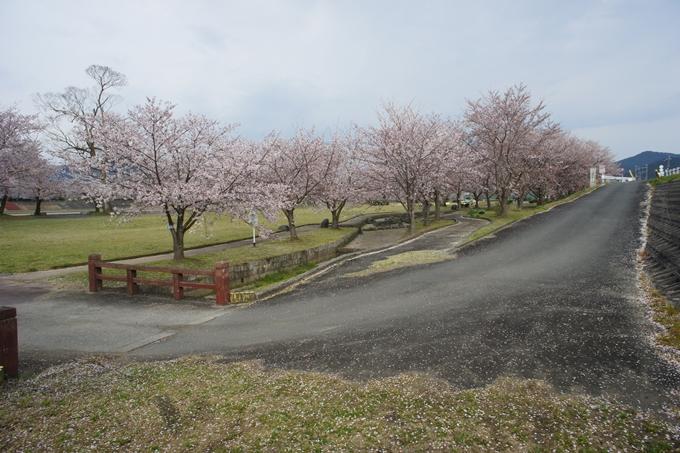 京都桜速報2019_42 No2