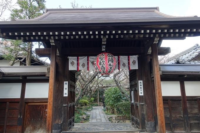 京都桜速報2019_20 No13