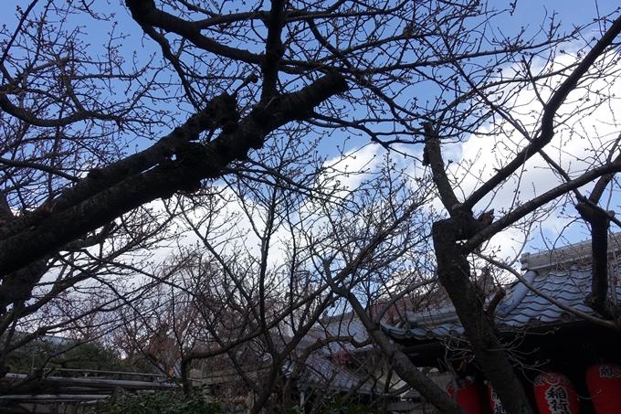 京都桜速報2019_20 No14