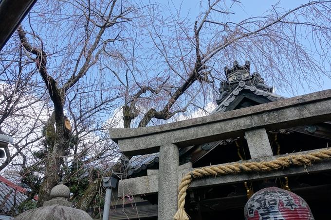 京都桜速報2019_20 No17