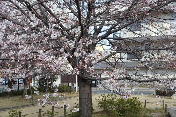京都桜速報2019_20 No22