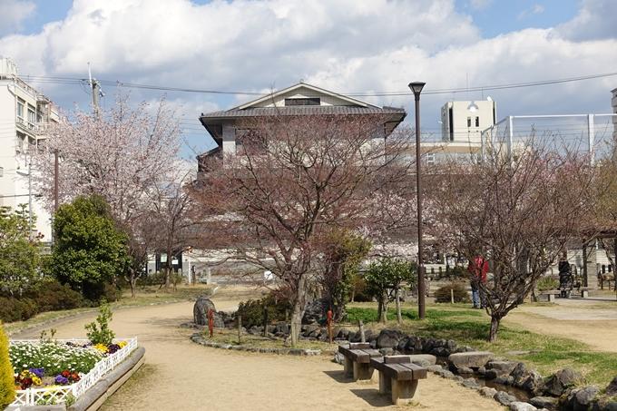 京都桜速報2019_20 No26