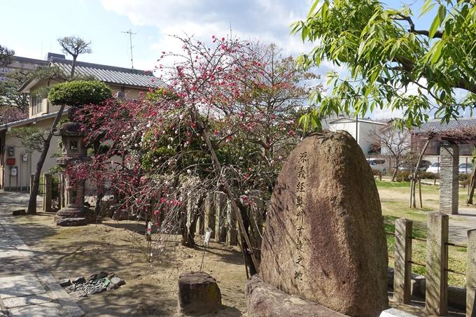京都桜速報2019_20 No28