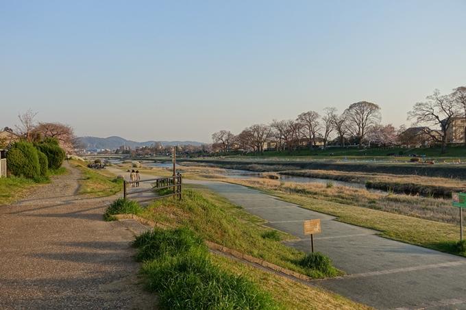 京都桜速報2019_22 No2