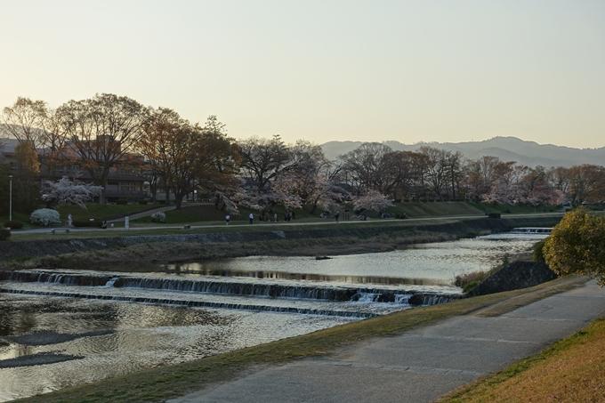 京都桜速報2019_22 No11