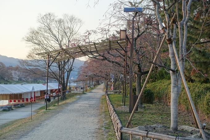 京都桜速報2019_22 No15