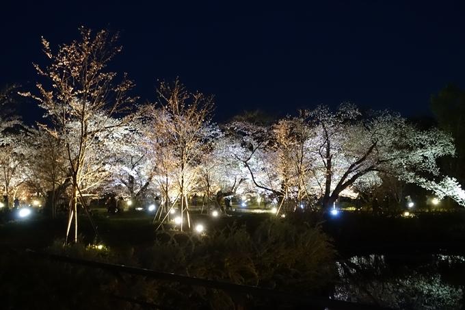 京都桜速報2019_23 No23