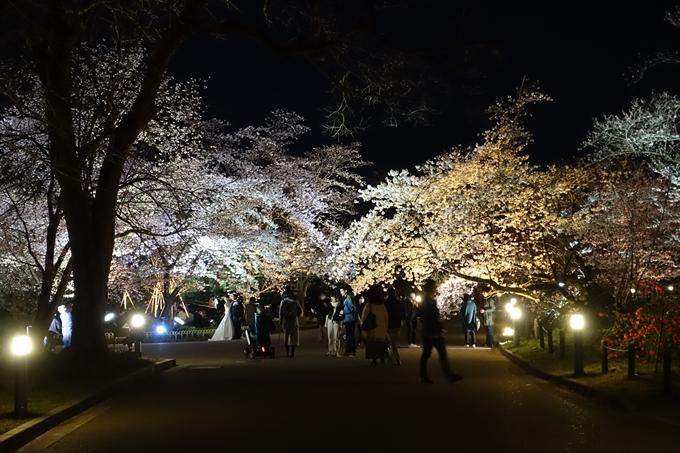 京都桜速報2019_23 No36
