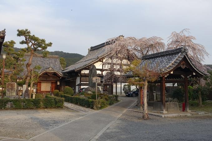 京都桜速報2019_24 No4