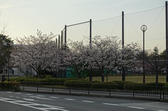 京都桜速報2019_25 No2