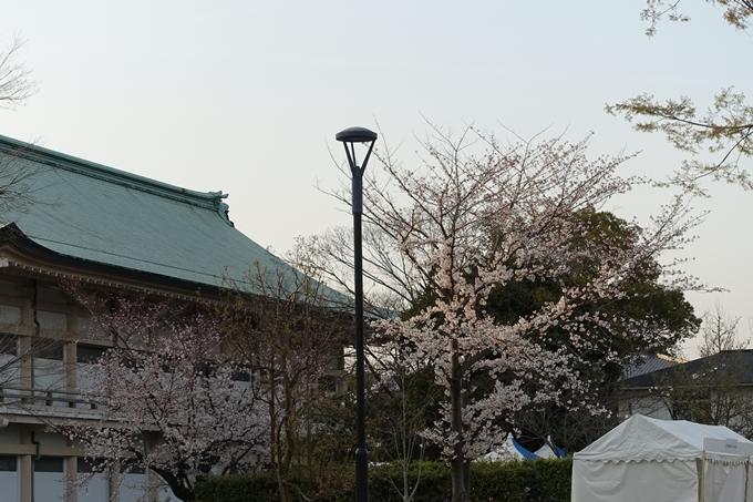 京都桜速報2019_25 No11