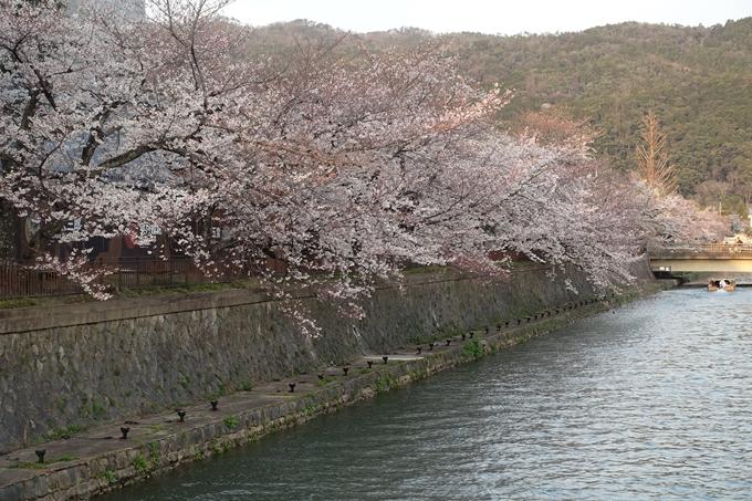 京都桜速報2019_26 No6
