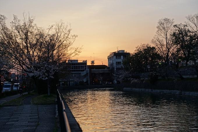 京都桜速報2019_26 No9