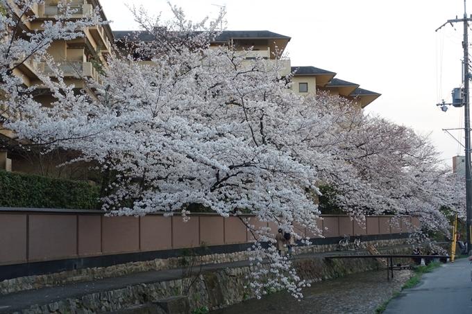 京都桜速報2019_26 No10