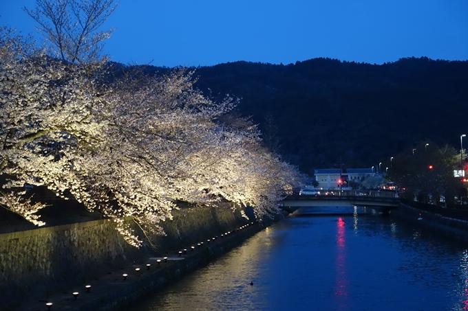 京都桜速報2019_26 No15