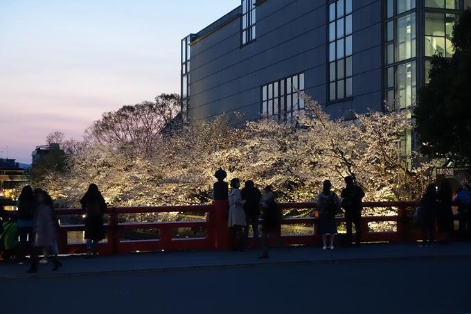 京都桜速報2019_26 No16