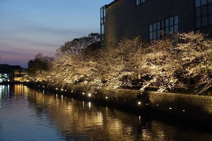 京都桜速報2019_26 No18