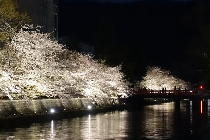 京都桜速報2019_26 No20