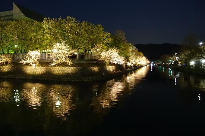 京都桜速報2019_26 No22