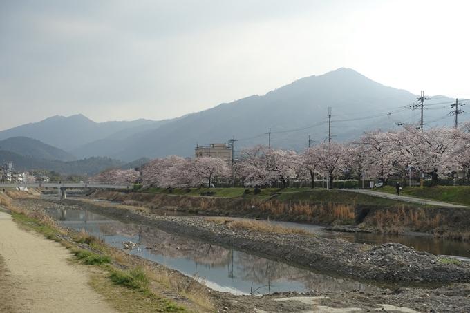 京都桜速報2019_27 No5