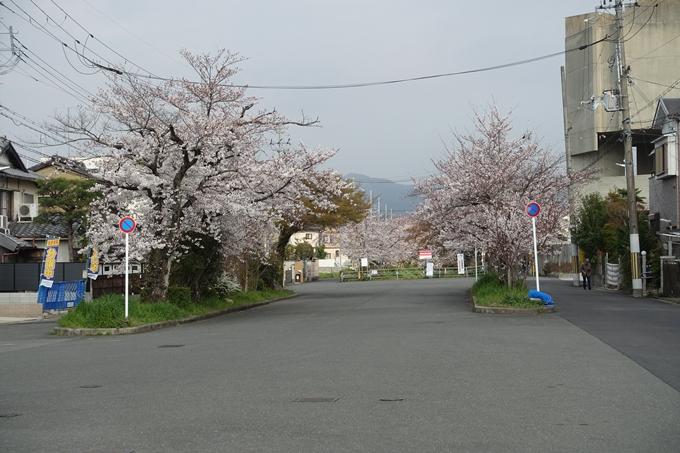 京都桜速報2019_27 No7